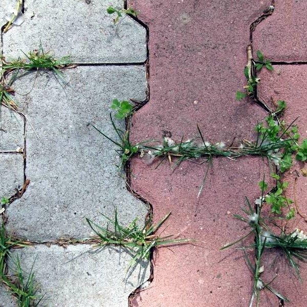 Методы и средства борьбы с сорняками на кладбище